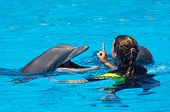 stock photo of dauphin  - photo of dolphins doing a show in the swimming pool - JPG