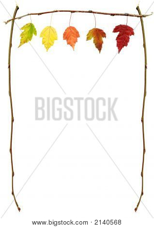 Autumn Leaves On A Branch