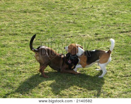 Juego de perros