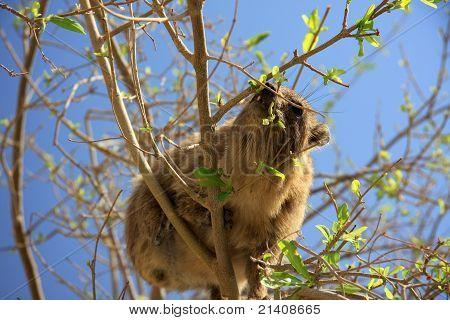 Mammal in Tree