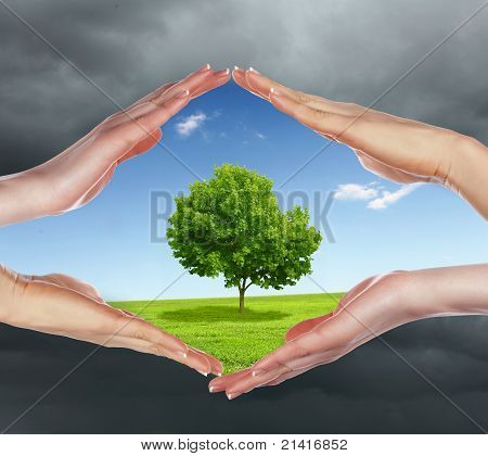 human hands protecting tree
