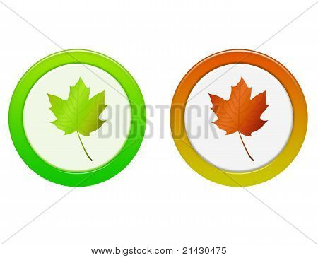 Autumn Leaf Button