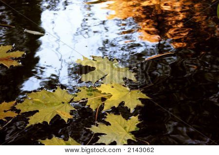 Yellow Maple Leaves In The Water Autumn