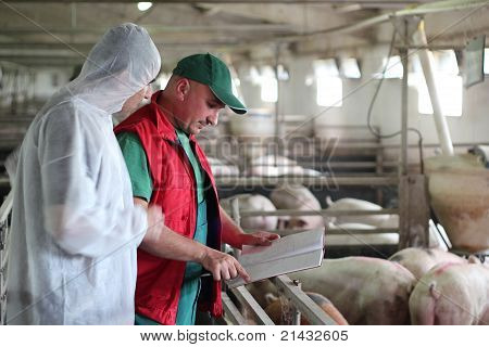 Pig Farm Workers