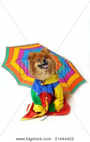 Comical Canine Rainy