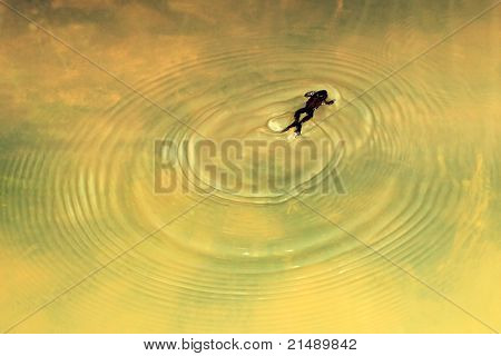 Swimming Frog Create Circle On Water Surface