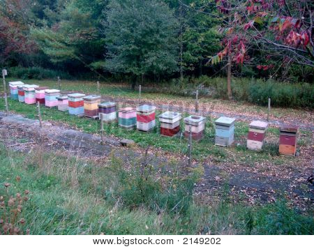 Bee Keeping Boxes