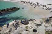 Harbor seals on the beach
