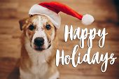 Happy Holidays Text, Seasonal Greetings Card Sign. Dog In Santa Hat. Space For Text. Cute Surprised poster