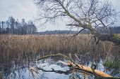 View Of The Lake In Autumn poster