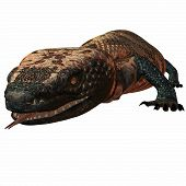 stock photo of gila monster  - 3 D Computer Render og an Gila Monster - JPG