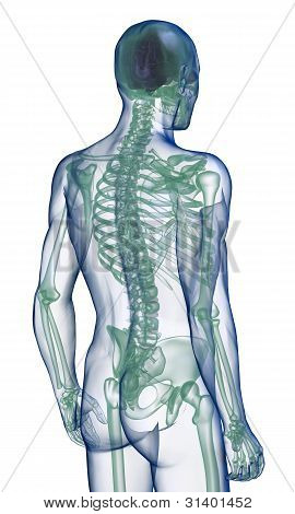 body x-ray perspective back view on white