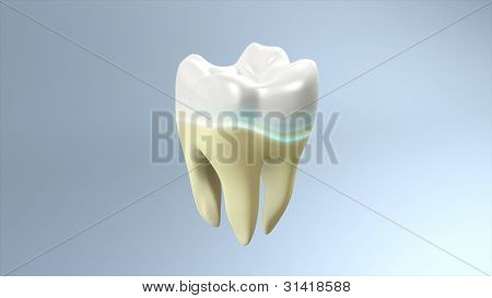 Yellow Tooth To White Tooth