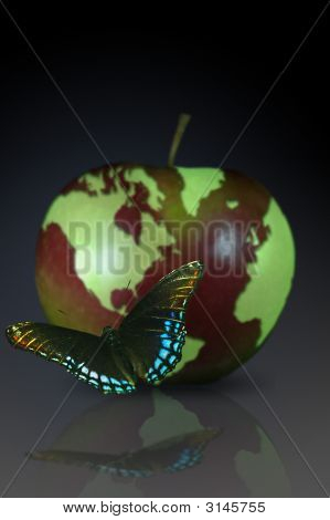 World Fruit Butterfly