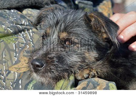 Shaggy Puppy
