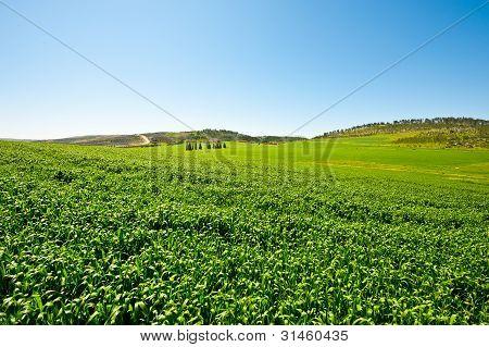Field In Israel