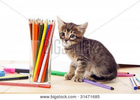 Tabby kitten on table with pencils