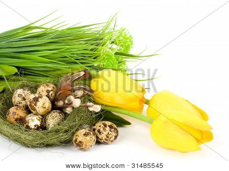 Nest with Easter quail eggs and spring tulips on white background