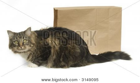 The Cat'S Out Of The Bag