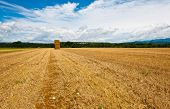 pic of briquette  - Briquettes of Dry Hay in a Field in Southern France - JPG