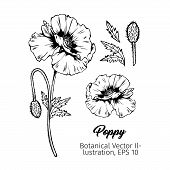 Poppies Flower Botanical Vector Sketches Set. Summer Blooming Honey Plant Black And White Hand Drawn poster