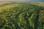Aerial View Green Forest Woods Landscape In Sunny Spring Evening. Top View Of Beautiful European Nat poster