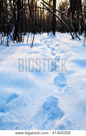 Way In Snow