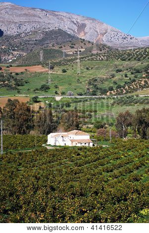Farmhouse and orange grove, Andalusia, Spain.