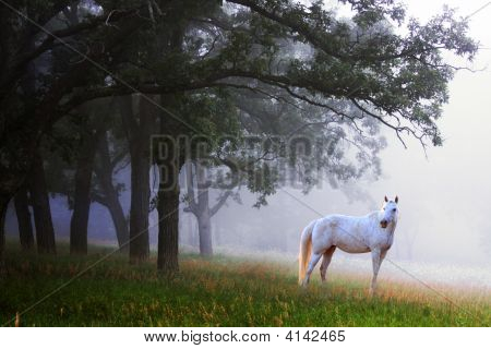 Horse In Mist Woods
