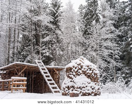 Winter Forest And Wood Stack