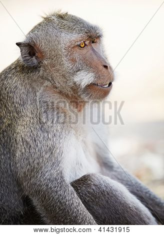 Relaxed Monkey