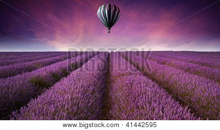 Stunning Lavender Field Landscape Summer Sunset With Hot Air Balloon