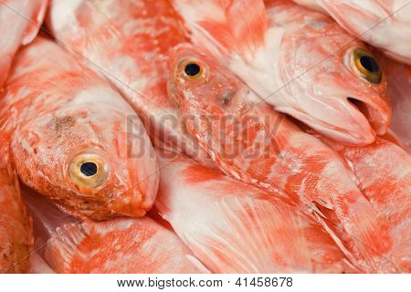 Redfishes