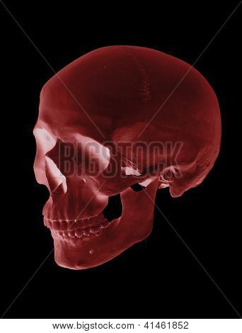 Isolated Red Cranium