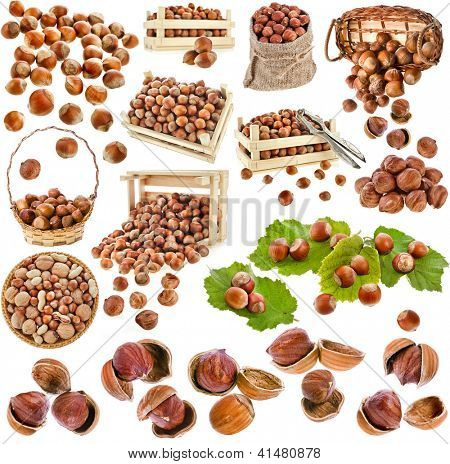 hazelnut filbert nuts , collection set  isolated on a white background