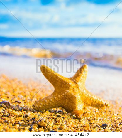 Under the Sun Sea Starlet
