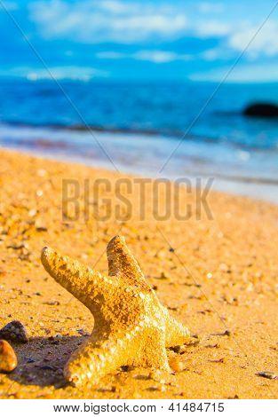 Sea Starlet Fallen Star