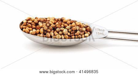 Coriander/cilantro Seeds Measured In A Metal Tablespoon