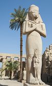 image of ramses  - Large famous statue of Ramses in the ancient temple at Karnak Luxor - JPG