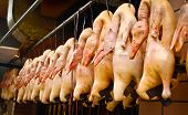 image of slaughter  - Slaughtered ducks hung in a row in a street market in Shanghai China - JPG