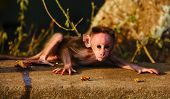 picture of baby spider  - I found this baby Indian macaque during a travel - JPG