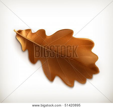 Oak leaf, vector