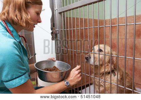 Veterinary Nurse Feeding Dog In Cage