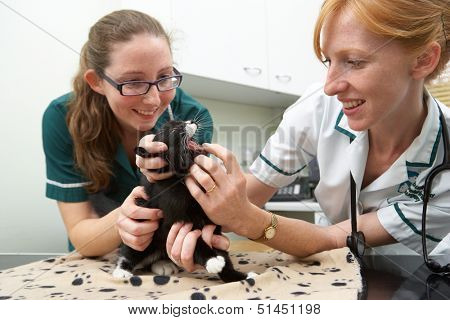 Female Vet Examining Cat In Surgery