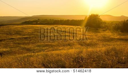 Field with sunlight