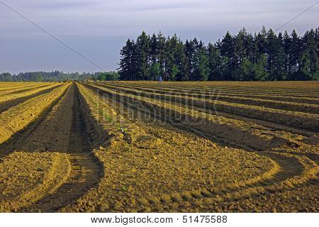 Plowed field in evening light