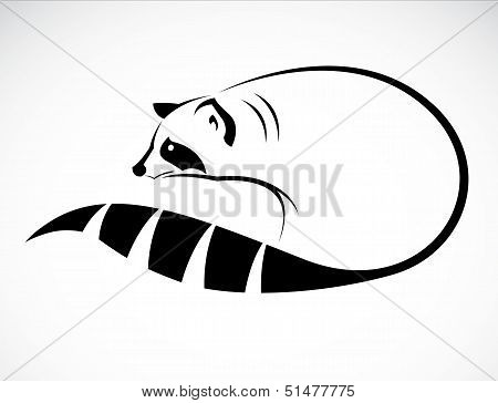 Vector image of an raccoon