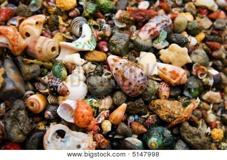 Shells From The Coast