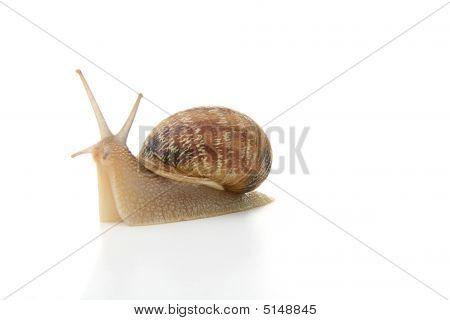 Snail Interviewed