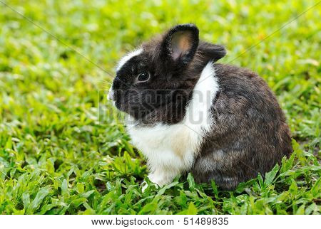 Bunny Rabbit Sits Quietly On The Lawn.